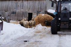 carneiros e trator Imagem de Stock Royalty Free