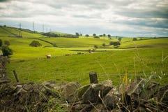 Carneiros em Cumbria foto de stock