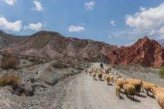 Carneiros em montes de sete cores Imagem de Stock