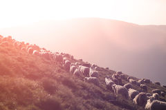 Carneiros em picos de montanha Imagem de Stock Royalty Free