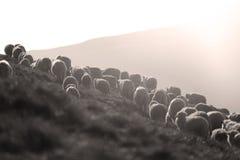 Carneiros em picos de montanha Imagens de Stock Royalty Free