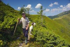 Carneiros em um pasto da montanha Fotografia de Stock Royalty Free
