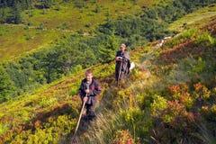 Carneiros em um pasto da montanha Imagens de Stock Royalty Free