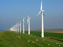 Carneiros entre os moinhos de vento Foto de Stock Royalty Free