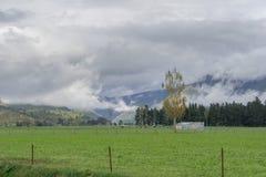 Carneiros na exploração agrícola de Nova Zelândia foto de stock