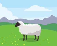 Carneiros no prado verde Ilustração do Vetor
