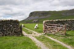 Carneiros, porta e pedra calcária Imagem de Stock