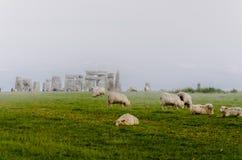 Carneiros que pastam em um Stonehenge nevoento foto de stock