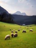 Carneiros que pastam no país Basque Fotos de Stock