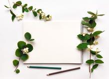 Carnet à dessins et crayons sur le fond blanc, décoré du vert Photos libres de droits