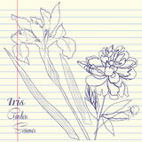 Carnet réglé avec la pivoine et un iris Images libres de droits