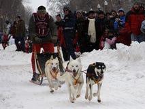 Carnevale della Quebec: Corsa della slitta del cane Immagini Stock
