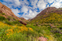 Carney Springs Trail is located in the remote area of the Superstition Mountain Wilderness. Carney Springs Trail in the Supersttion Mountain Wilderness of Stock Photography