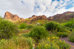 Carney Springs Trail is located in the remote area of the Superstition Mountain Wilderness. Carney Springs Trail in the Supersttion Mountain Wilderness of Stock Images