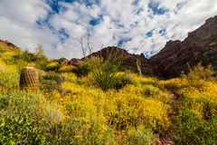 Carney Springs Trail is located in the remote area of the Superstition Mountain Wilderness. Carney Springs Trail in the Supersttion Mountain Wilderness of Royalty Free Stock Image