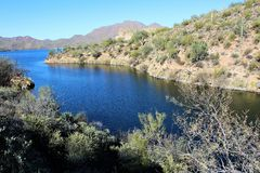 Carniceiro Jones Beach Arizona, floresta nacional de Tonto foto de stock