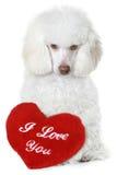 Carniche avec le coeur rouge de valentine Photographie stock libre de droits