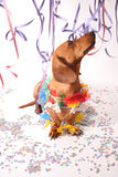 Carnival dog party Royalty Free Stock Photography