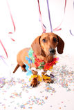 Carnival dog party Royalty Free Stock Photo
