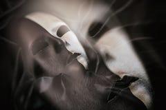 Carnival mask on black satin background Stock Photo