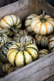 Carnival pumpkins. Fall classic, the bounty of harvest. Natural seasonal texture and color pallet Royalty Free Stock Photo