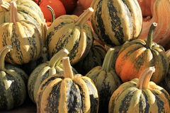 Carnival Squash Royalty Free Stock Images