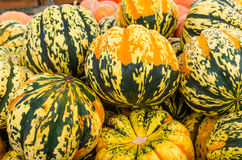 Carnival squash colorful display at market Royalty Free Stock Image