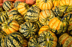 Carnival squash at the market Royalty Free Stock Photo