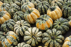 Carnival Squash Royalty Free Stock Photography