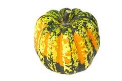 Carnival Winter Squash. A colorful orange, yellow and green Carnival winter squash Royalty Free Stock Image
