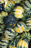 Carnival winter squash at the market Royalty Free Stock Photo