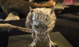 Carnivore ποντίκι δαιμόνων Στοκ φωτογραφία με δικαίωμα ελεύθερης χρήσης