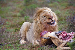 Carnivore Delight stock photography