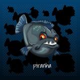 Carnivorous piranha grins on a dark background Royalty Free Stock Image