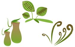 Carnivorous plant Stock Photo