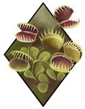 Realistic picture of  a carniviorous plant Stock Photography