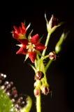 Carnivorous plant Royalty Free Stock Photo