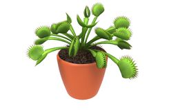Carnivorous plant Royalty Free Stock Photo