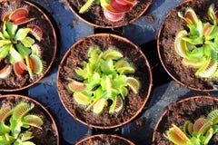 carnivorous växt royaltyfri fotografi