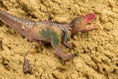 Carnotaurus på sand Royaltyfria Foton