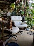 Caro cão velho no tamborete da cadeira reciclada fotos de stock