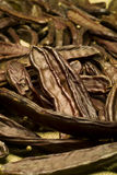 The Carob (Ceratonia siliqua). Chocholate alternative Royalty Free Stock Images