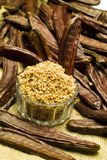 The Carob (Ceratonia siliqua). The carob plant (Ceratonia siliqua) flour Stock Photo