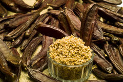 The Carob (Ceratonia siliqua). The carob plant (Ceratonia siliqua) flour Stock Image