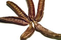 The Carob (Ceratonia siliqua). The carob on the white surface Stock Photos