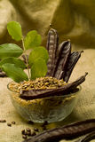 The Carob (Ceratonia siliqua). Flour Royalty Free Stock Photos