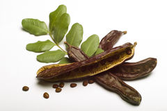 Carob (Ceratonia siliqua) with leaf Stock Photo