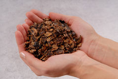 Carob, fake chocolate, pieces of karob Stock Image
