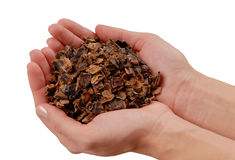 Carob, fake chocolate, pieces of karob are in hands Stock Images