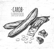 Carob pods. Used for the production of carob powder. Royalty Free Stock Photography